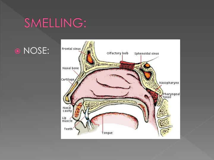 SMELLING: