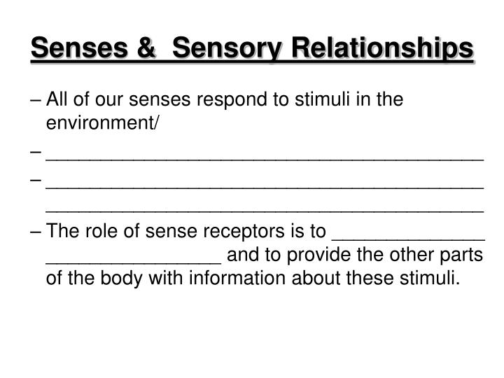 senses sensory relationships