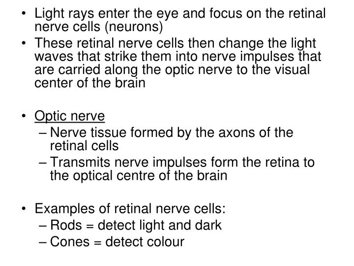 Light rays enter the eye and focus on the retinal nerve cells (neurons)