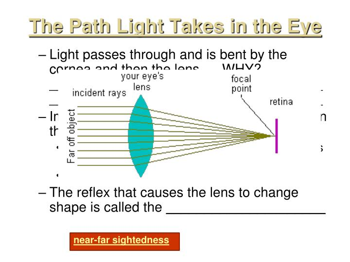 The Path Light Takes in the Eye
