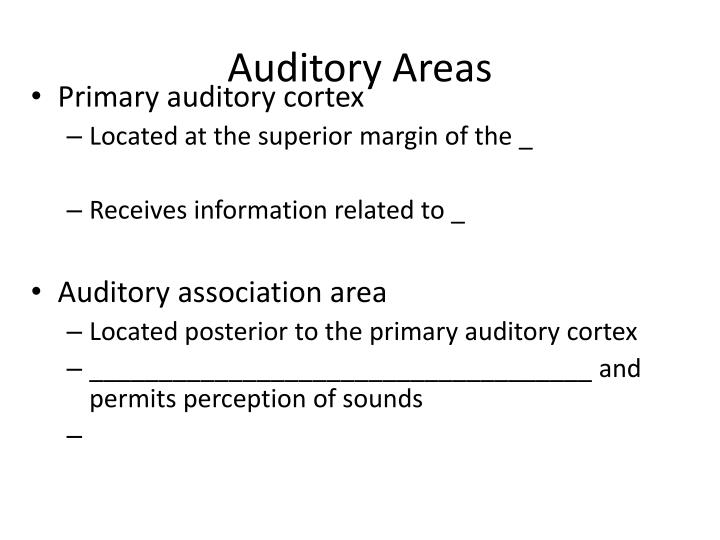 Auditory Areas