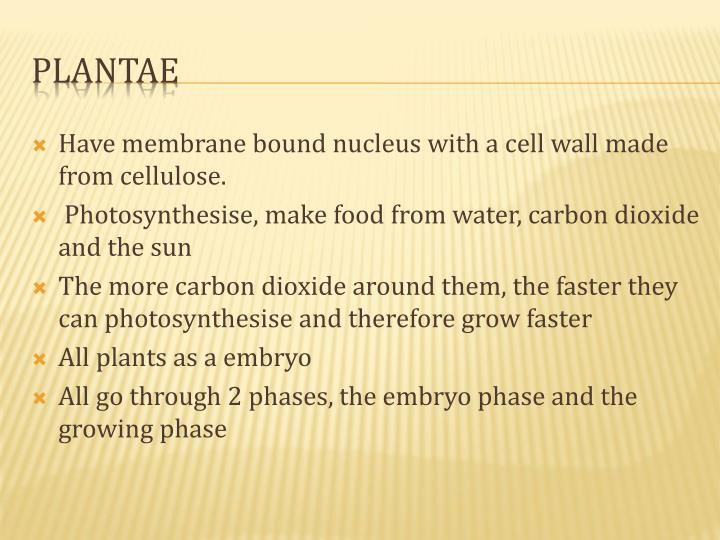 Have membrane bound nucleus with a cell wall made from cellulose.