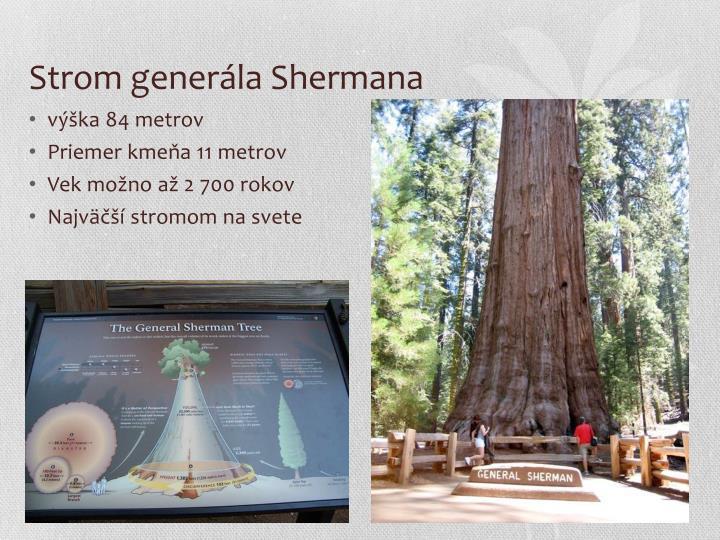 Strom generála Shermana