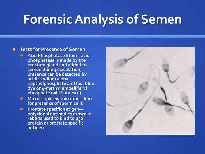 Forensic Analysis of Semen