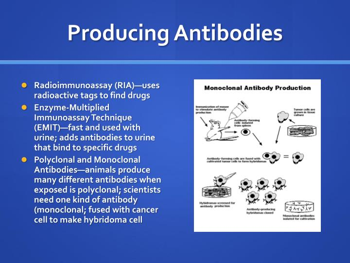 Producing Antibodies