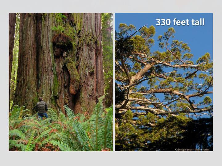 330 feet tall