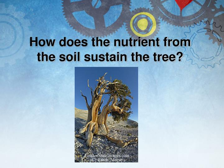 How does the nutrient from the soil sustain the tree?