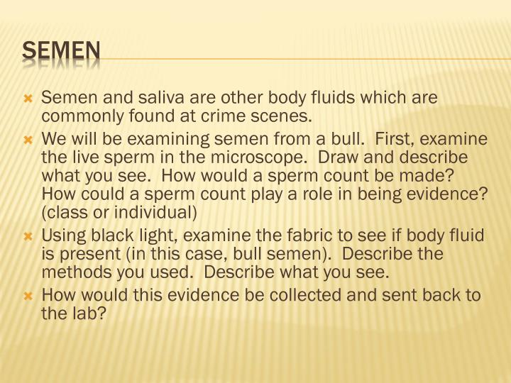 Semen and saliva are other body fluids which are commonly found at crime scenes.
