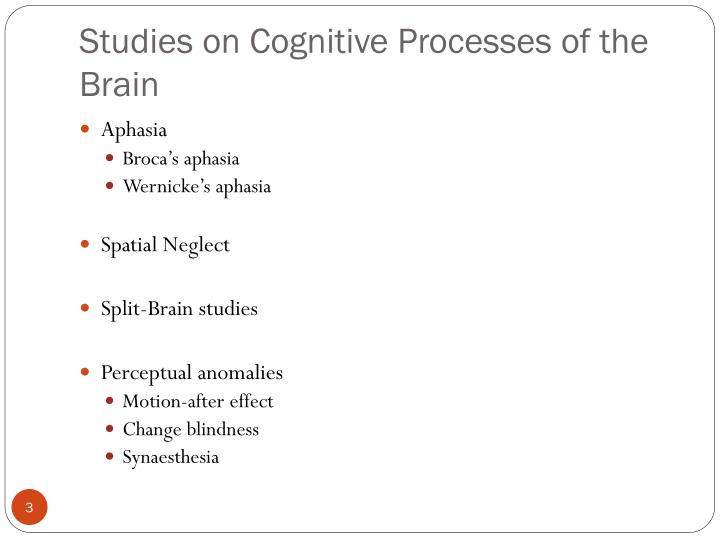 Studies on Cognitive Processes of the Brain