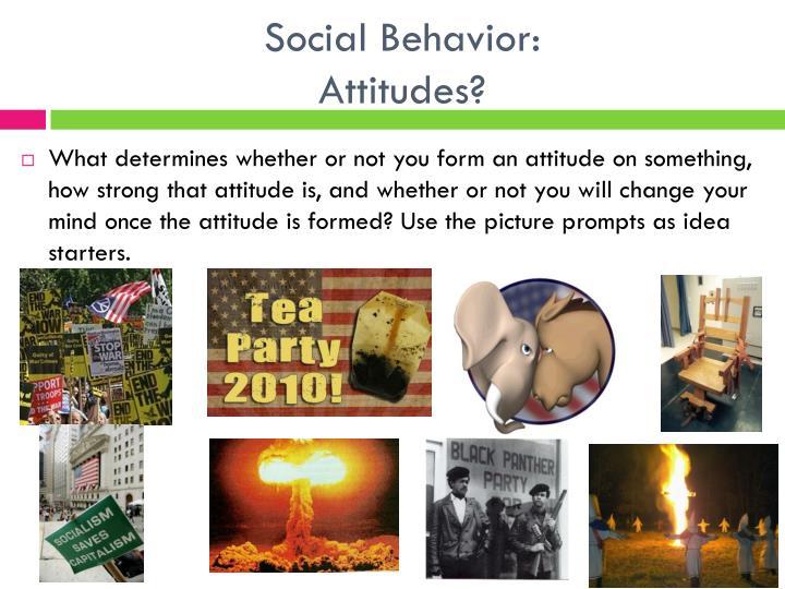 Social Behavior: