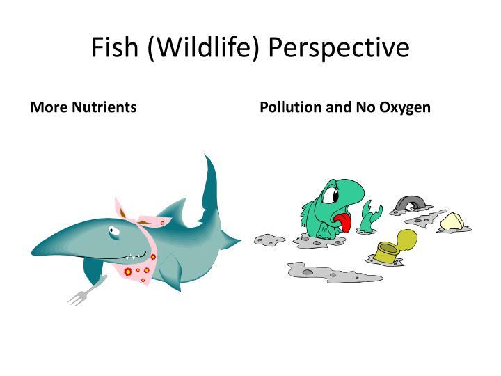 Fish (Wildlife) Perspective