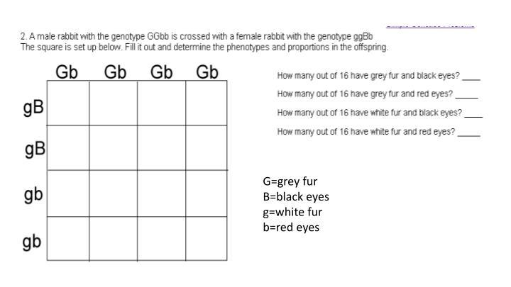G=grey fur