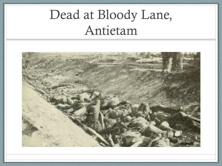 Dead at Bloody Lane, Antietam