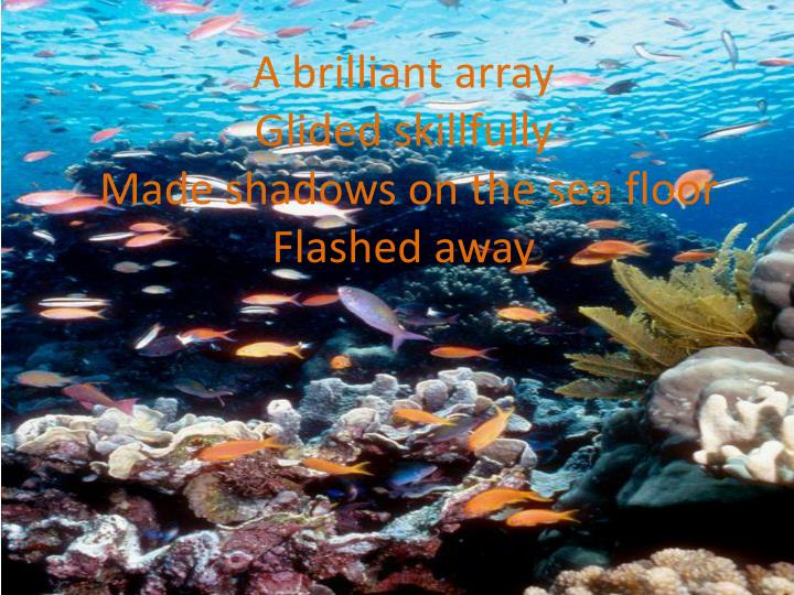 a brilliant array glided skillfully m ade shadows on the sea floor flashed away