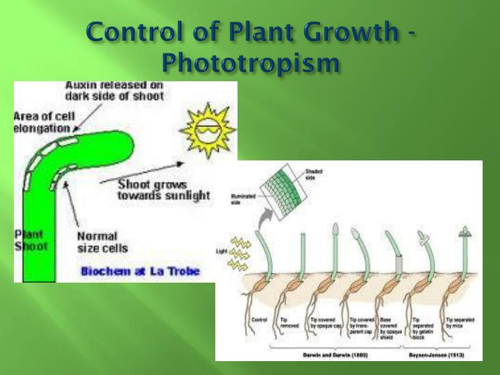 Control of Plant Growth - Phototropism