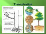 transpiration1