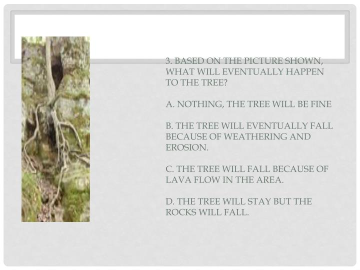 3. Based on the picture shown, what will eventually happen to the tree?