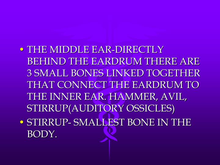 THE MIDDLE EAR-DIRECTLY BEHIND THE EARDRUM THERE ARE 3 SMALL BONES LINKED TOGETHER THAT CONNECT THE EARDRUM TO THE INNER EAR. HAMMER, AVIL, STIRRUP(AUDITORY OSSICLES)