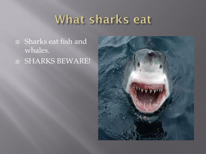 What sharks eat