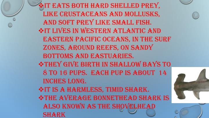It eats both hard shelled prey, like crustaceans and mollusks, and soft prey like small fish.