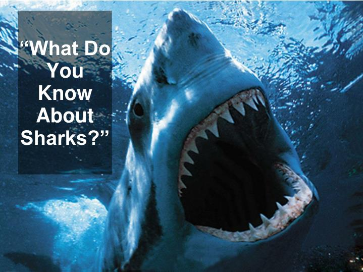 What do you know about sharks