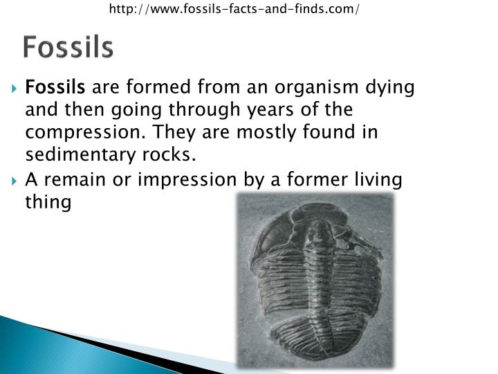 http://www.fossils-facts-and-finds.com/
