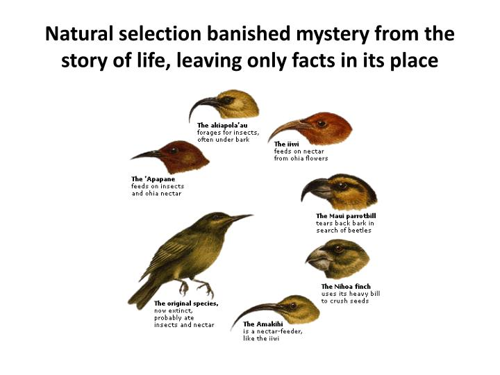 Natural selection banished mystery from the story of life, leaving only facts in its place