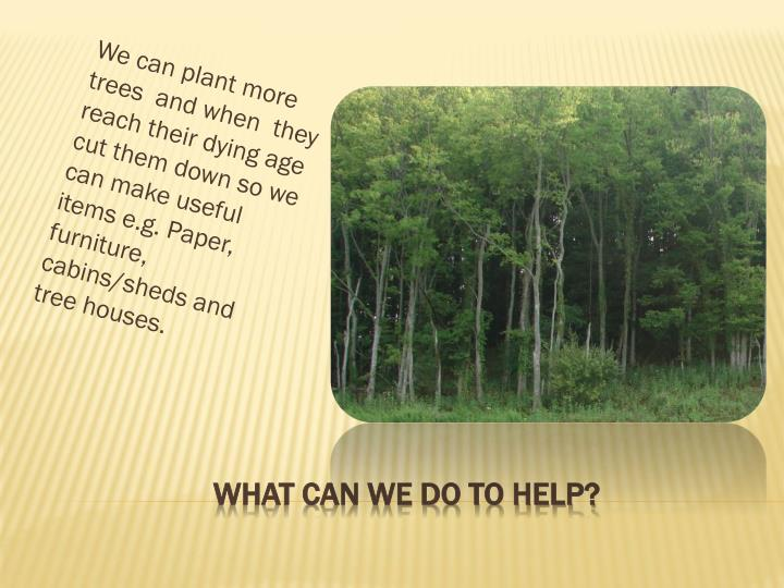 We can plant more trees  and when  they reach their dying age cut them down so we can make useful items e.g. Paper, furniture, cabins/sheds and tree houses.