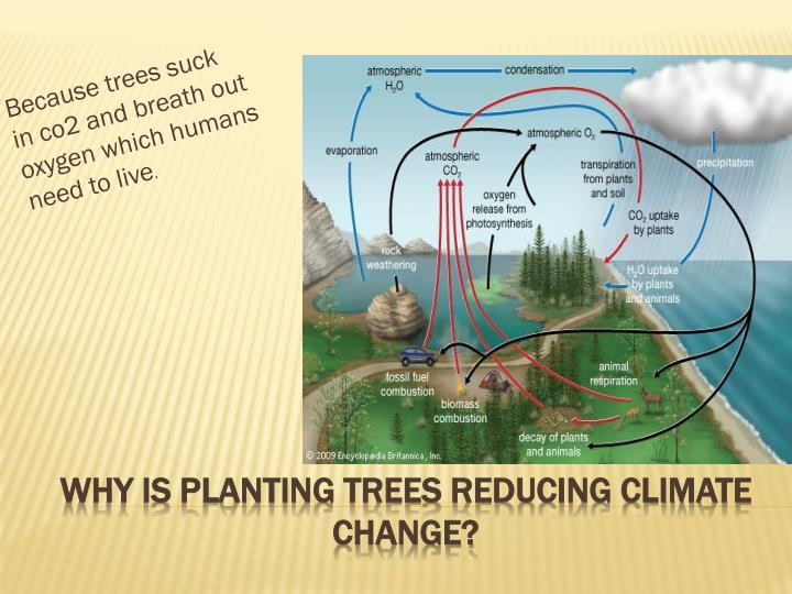 Because trees suck in co2 and breath out oxygen which humans need to live