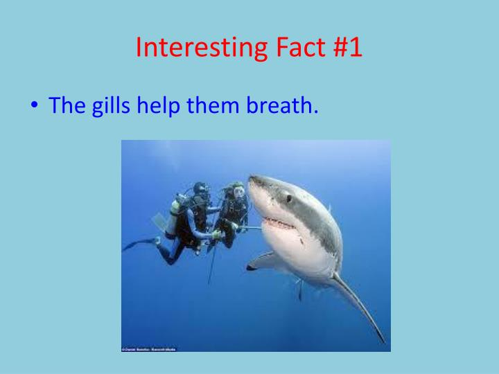 Interesting Fact #1