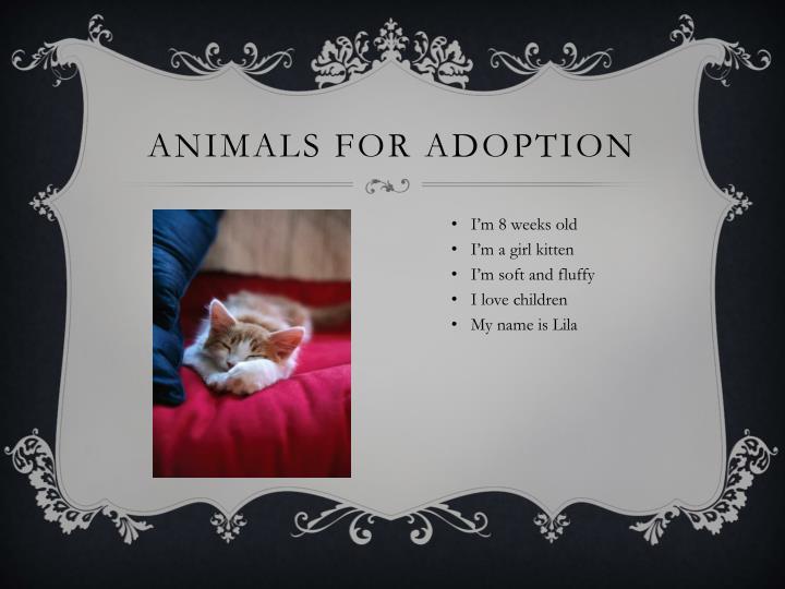 Animals For Adoption