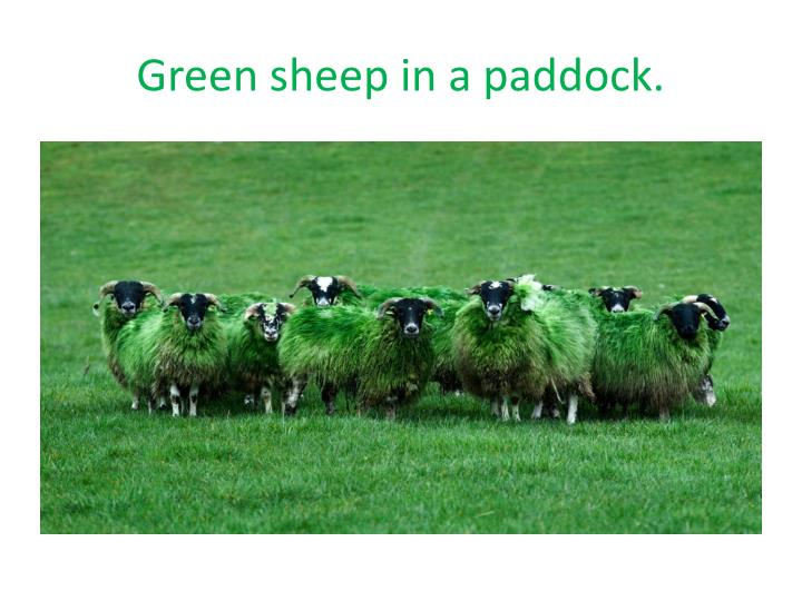 Green sheep in a