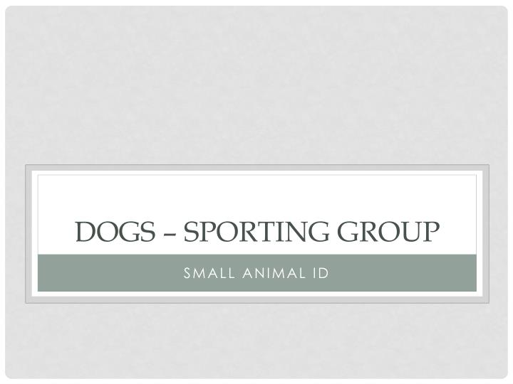 Dogs – Sporting Group