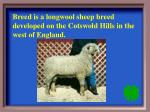 breed is a longwool sheep breed developed on the cotswold hills in the west of england