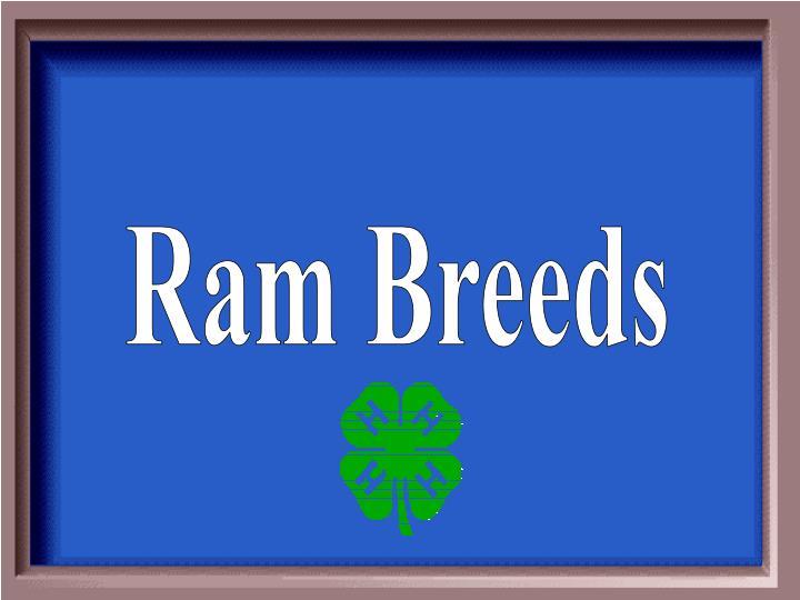 Ram Breeds
