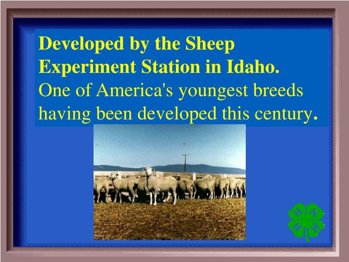 Developed by the Sheep Experiment Station in Idaho.