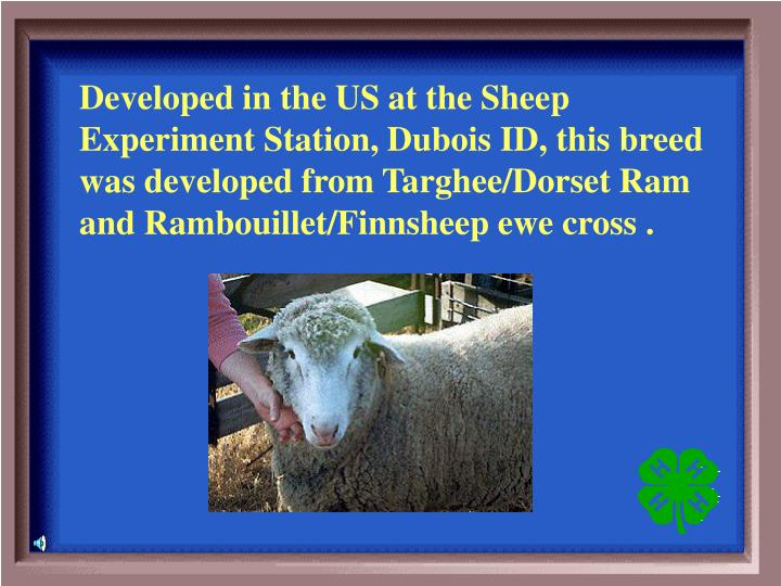 Developed in the US at the Sheep Experiment Station, Dubois ID, this breed was developed from