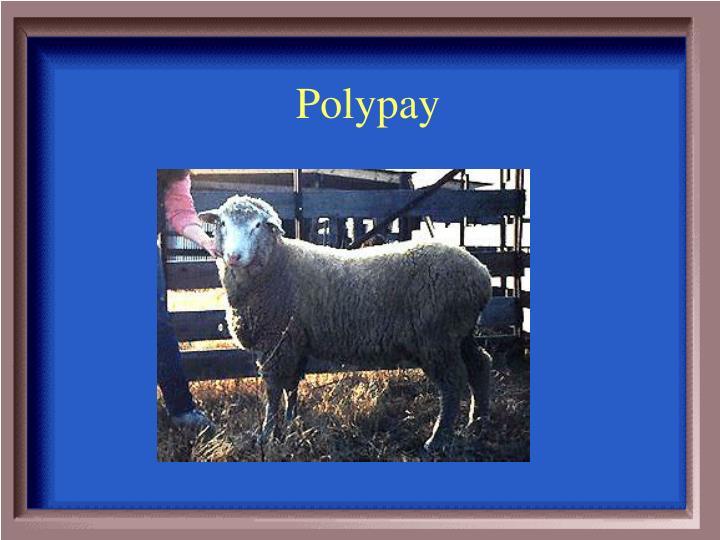 Polypay