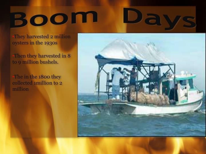 Boom  Days