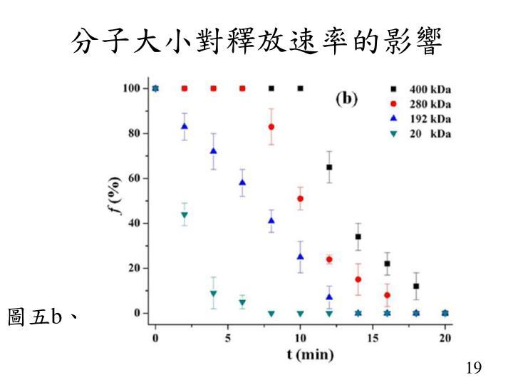 分子大小對釋放速率的影響