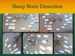 sheep brain dissection1