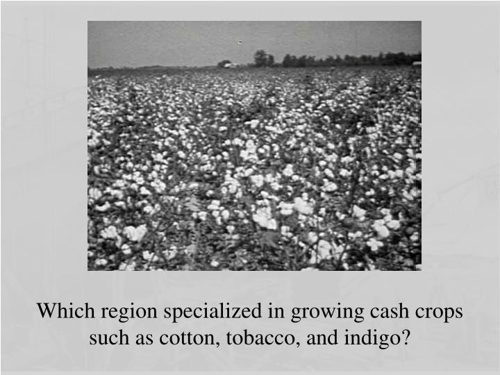 Which region specialized in growing cash crops such as cotton, tobacco, and indigo?