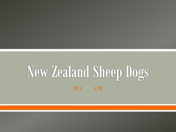 New Zealand Sheep Dogs