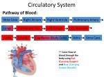 circulatory system7