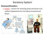 excretory system9