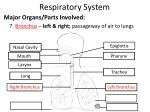 respiratory system7