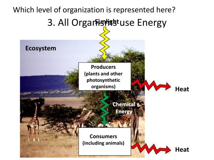 3. All Organisms use Energy