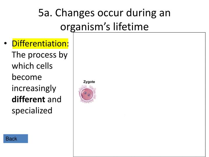 5a. Changes occur during an organism's lifetime