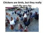 chickens are birds but they really can t fly very far