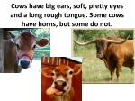 cows have big ears soft pretty eyes and a long rough tongue some cows have horns but some do not